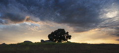San Diego : Ramona (William Dunigan) Tags: san diego ramona grasslands preserve landscape photography color california southern mountains foothills sunset dusk clouds oak tree nature
