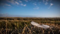 Feather (G. Warrink) Tags: waddenzee waddensea unesco unescoworldheritage unescoworldheritagesite moddergat friesland frisia nature outsideisfree sun sea clouds water coast mud
