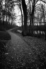 Stralsund / Devin - Weg zum Sund (tom-schulz) Tags: ricoh grii monochrom bw sw rawtherapee gimp stralsund thomasschulz weg pflastersteine bäume sund