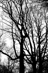 Sexy Trees (Massimo Usai Photography) Tags: travel europe poland warsaw streetphoto 2019 trees nature blackandwhitesilhouette
