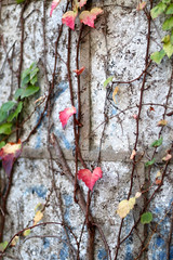 Day 704 (material grrrl) Tags: 365 leaves foliage colors autumn fall