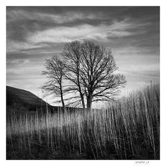 balanced (W.MAURER foto) Tags: structures bw blackandwhite nature tree grass gras baum square quadratisch himmel tirol entspannung