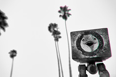 Invasion (thedot_ru) Tags: toy toys palmtrees blackandwhite bw monochrome palms trees nature outdoors outside california sunny noclouds sky jea threea robot mini bot figure statue sculpture usa unitedstates adventure wanderlust epic hero heroic humanity humans people canon5d 2012