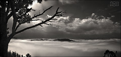 Pino y nubes / Pine and clouds (Jose Antonio. 62) Tags: spain españa asturias trees arboles clouds nubes seaofclouds mardenubes bw blancoynegro blackandwhite silhouette silueta pinos pines