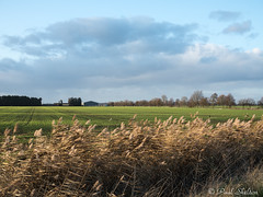 _C080035 (Paul_sk) Tags: paglesham essex farmland