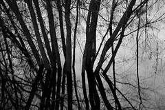 DSC_1116 (wrona_czarna) Tags: water shadow blackandwhite