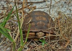 Lake Louisa Wildlife (janedoe.notts) Tags: statepark animal wildlife wild park nature naturereserve olympus omd em10markii 12100