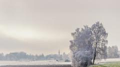 Kalter Nebel (w.lichtmagie) Tags: frost winter kalt nebel vilsheim landshut niederbayern bayern deutschland canonefs1755