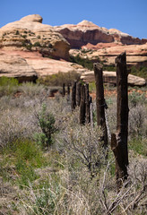 Kirk Fence Pano (xjblue) Tags: fence saltcreek canyon canyonlands southernutah canyonlandsnationalpark history historic kirk scenic desert spring backpacking stitch olympus bokehpanorama 50200mmswd