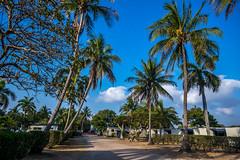 Alva Beach Park (agasfer) Tags: 2019 australia pentax k3 sigma1020 palms camping