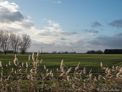 _C080036 (Paul_sk) Tags: paglesham essex farmland