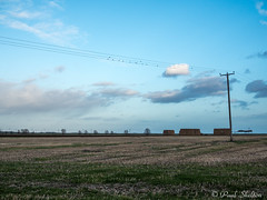 _C080050 (Paul_sk) Tags: paglesham essex farmland