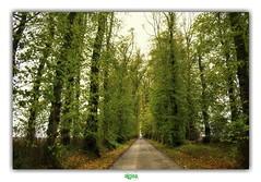 WHERE HAVE THEY BEEN ? (régisa) Tags: givenchylenoble allée tilleuls lignereuil ternois arbre joydivision lalléeaux800tilleuls alignement d77