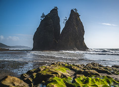 Rialto Beach - Olympic National Park - September 2019 (Chad Baxter) Tags: nikon d850 2485mm g rialto beach national park forest water rock rocks sand ocean pacific sky sea seagull olympic blue green red yellow jacket rain sun scenic coast fish marine life waves tidepools tide pools trees bark wood iso64 nikonfxshowcase