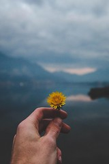 The last flower (Davidfrank97) Tags: mountain lake flower clouds