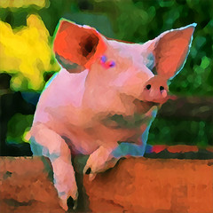 Have You Ever Danced With A Pig? (amarcord108) Tags: amarcord108 pig