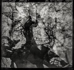 confusion (*altglas*) Tags: mittelformal mediumformat bronica zenzabronica ectl nikkoro3550 schwarzweis monochome bw multipleexposure film analog tree baum baumkrone 6x6 orwonp20 expiredfilm expired