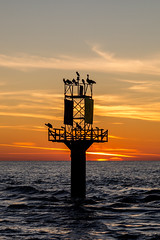 Sundown (Mike Matney Photography) Tags: 2019 canon destin eos6d florida november vacation sundown sunset silhouette birds