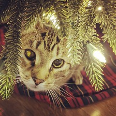 Found an early Christmas turd under the tree. #everthingbagelcat @k8sticky (pdiehl85) Tags: instagram iphoneography instagramapp