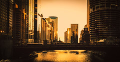 Dusk (brightledge photography) Tags: chicago cityscape night twilight skyline view travel goldenhour golden tower