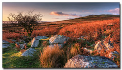 Distant Cox Tor (jeremy willcocks) Tags: distantcoxtor dartmoor devon ukjeremywillcocksfujixt3xf1024mmnisilcpl 09mediumgrad landscape nationalpark greatbritain england colour sunset tree rocks boulders sky clouds evening december grass reeds ferns view wwwsouthwestscenesmeuk jeremywillcocks