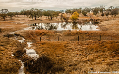Roadside (Srihari Yamanoor) Tags: nature photography landscape california ca 120 108 roadside fall winter reflection water srihari yamanoor grass dried orange oaks fence road environment ecology foreground scenic outdoors tranquil canon eos 5dsr adobe lightroom trees clouds