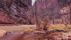 Zion Canyon (pboolkah) Tags: utah unitedstatesofamerica springdale trees red mountains nature canon landscape rocks canon5d zion canon5dmkiv
