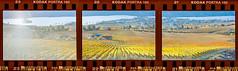 Osoyoos Fall Film Triptych (Greg Reely) Tags: film kodak analog triptych scan osoyoos okanagan bc canada scenic art fall vineyards orchards beautiful sunset lakes
