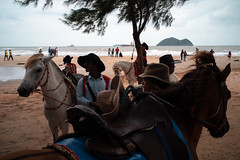 * (Sakulchai Sikitikul) Tags: street snap streetphotography summicron songkhla sony a7s 35mm leica thailand samilabeach horse cowboy seascape sea silhouette