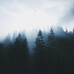 last light (nuvoIari) Tags: forest sunset fog mist trees videogame farcry5