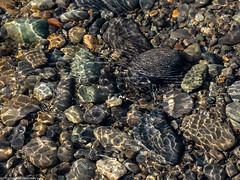 Ripples (Ramona H) Tags: nooksack nooksackriver light ripples rocks stones