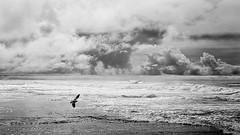Sea 'n Sky in Concert (jwsmithphoto) Tags: pacificocean sandiego lajolla surf clouds stormclouds california monochrome