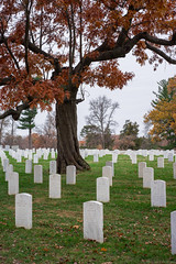 Arlington Cemetery (Fret Spider) Tags: thanksgiving arlingtoncemetery washingtondc memorial remember neverforget thankful grateful wife holiday vacation capital usa sonya7ii mirrorless burial grave fall season beauty love leicaaposummicron50mmf20asph manuallens monument