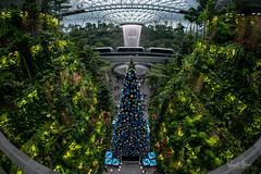 Christmas a Jewel Changi (Samsul Adam) Tags: changi airport jewel terminal 1 fujifilm xt1 samyang 8mm f28 wide angle christmas tree fountain