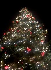 Christmas tree 🎄 with red hearts ♥️ in Old Town square, Tallinn, Estonia (Sierra_the_Dog) Tags: christmas hearts estonia talinn love adventure celebration