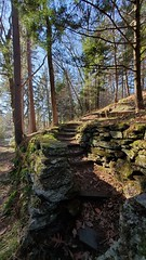 2019-12-08_10-23-04 (MaggieDu) Tags: landscape woodstockvt billingsfarm billingsfarmandmuseum path forest woods rocks