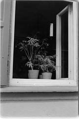 plants in the window (sebastel23) Tags: rolleiretro80s exposedlikeiso64 rodinal150 13min