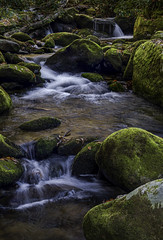 Mountain Stream (aceoutwide120) Tags: greatsmokymountainsnationalpark smokymountains mountainstream stream water rocks moss nationalpark roaringforkmotortrail landscapephotography naturephotography landscape nature nikond7500 focusstack