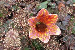 Hilliers Arboretum (Jainbow) Tags: hilliers arboretum jainbow flower sculpture