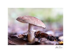 Sunbathing (g.femenias) Tags: mushroom fungi bug leaves bokeh nature naturallight autumn woods caimari mallorca
