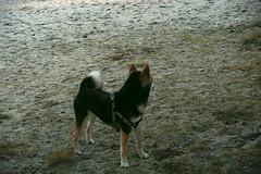 More Doggo (Jake Maslak) Tags: xt1 digital fujifilm fuji summer warm dogs dog nature outside beach animals