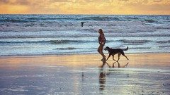 Come Fly With Me (Christina's World :) Tags: 3883 realpeople california candid bird beach brightcolors delmar dark dramatic dusk dog reflections running flying sunset goldenhour sea seashore ocean pacific waterscene waves happy scenic seascape topaz woman female runner dogwalking