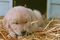 Puppy Laney