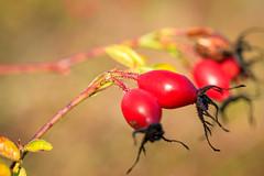 Photo of Berries