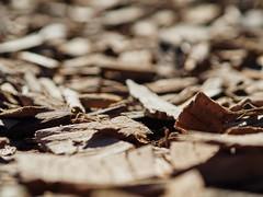 香香木片 (亞刃) Tags: olympus em10mkiii m43 olympusm45mmf18 街道 street brown woodchips