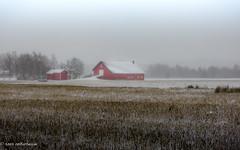 After the harvest (FotoRoar2013) Tags: fotoroar2013 2019 canon 5dmk3 winter weather farm vinter snow snø norway norwegen noruega norge norvegia nature natur norwege norvege outdoor tim