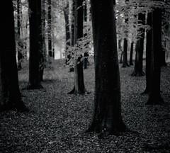 Hagaparken (fromfarbeyond) Tags: pentax spotmatic ilford delta 3200 analog film leaves autumn trees hagaparken