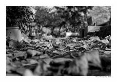 """""""Cimetière Des Chiens D'Asnières 6"""" (TBWLC Photography) Tags: fdrouet tbwlc bw monochrome cimetière cemetery nikon d610 nb"""