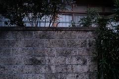 XF35mmF1.4 R (TimothyHall.org) Tags: sooc fujifilmxt3 fujifilm fujinon xt3 xf35 xf35mmf14r xf35mm 50mm フジノン 富士フィルム 撮って出し classicchrome