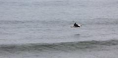 Levitation (Keith Midson) Tags: gull seagull bird cliftonbeach tasmania flying rain raining sea water canon 400mm